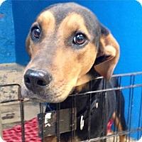 Adopt A Pet :: Dorothy - Pompton Lakes, NJ