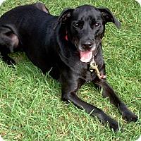 Adopt A Pet :: Smokey  COURTESY POST - Chesterfield, MI