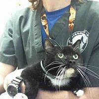 Adopt A Pet :: MAGGIE - Conroe, TX