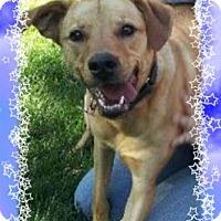 Adopt A Pet :: Buzz - Adoption Pending - Tipp City, OH