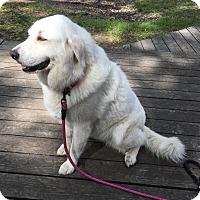 Adopt A Pet :: Daphne - Kyle, TX
