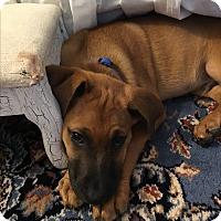 Adopt A Pet :: Spencer - Marietta, GA