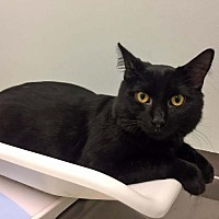 Adopt A Pet :: Georgie - Arlington, VA