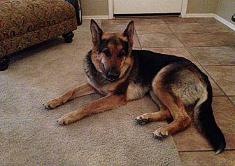German Shepherd Dog Mix Dog for adoption in Queen Creek, Arizona - Izzy