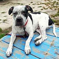 Adopt A Pet :: BO - Hampton Bays, NY