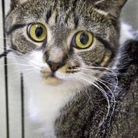 Adopt A Pet :: Triscuit - Columbus, NC