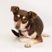 Adopt A Pet :: Juliet - Santa Cruz, CA
