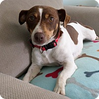 Adopt A Pet :: Lizzie Lou - Knoxville, TN