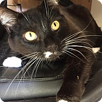 Adopt A Pet :: Courtesy List-Ponch - Scottsdale, AZ