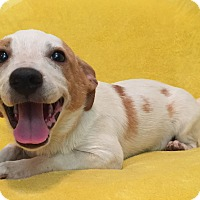 Adopt A Pet :: Heather - Kittery, ME