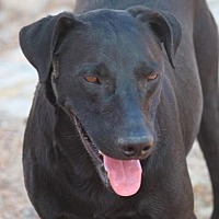 Adopt A Pet :: Wes Craven - Jewett City, CT