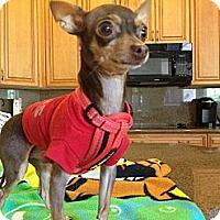 Adopt A Pet :: Cesar - Davie, FL