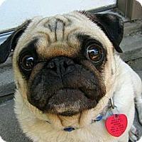 Adopt A Pet :: Bo - Eagle, ID