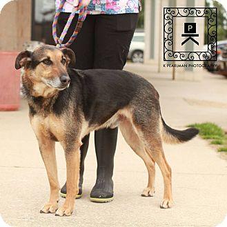 Shepherd (Unknown Type)/Labrador Retriever Mix Dog for adoption in Fredericksburg, Virginia - Micah