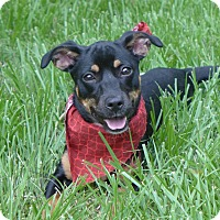 Adopt A Pet :: Moxie - Mocksville, NC
