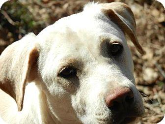 Labrador Retriever Mix Dog for adoption in Cedar Creek, Texas - Gracie