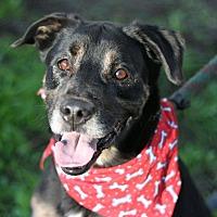 Adopt A Pet :: Gazpacho - Canoga Park, CA