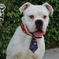 Adopt A Pet :: Jax III - Fremont, CA
