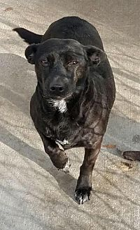 Terrier (Unknown Type, Medium) Mix Dog for adoption in Columbia, Tennessee - Nelly