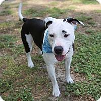 Adopt A Pet :: Georgia - Lakeland, FL