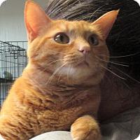 Adopt A Pet :: Chet - Reeds Spring, MO