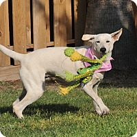 Adopt A Pet :: Darby - Tomball, TX