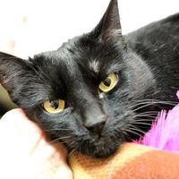 Adopt A Pet :: Betty - Redmond, OR