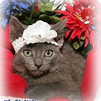 Adopt A Pet :: Flower - Shippenville, PA