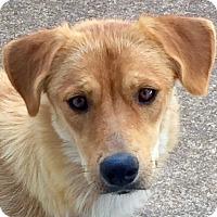 Adopt A Pet :: Candy - Staten Island, NY