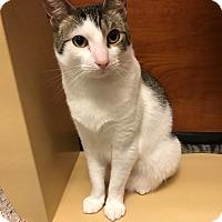 Adopt A Pet :: My Boy - Islip, NY