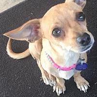 Adopt A Pet :: Taylor Swift - Fresno, CA