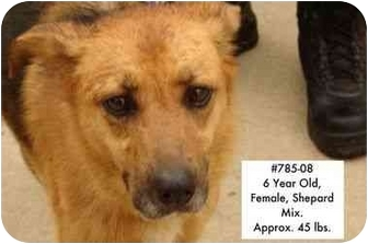 Shepherd (Unknown Type) Mix Dog for adoption in Zanesville, Ohio - # 785-08 - RESCUED!