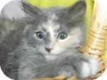 Domestic Mediumhair Kitten for adoption in Clearfield, Utah - Thumbalina