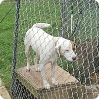 Adopt A Pet :: Patch - Albany, NY