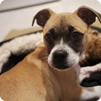 Adopt A Pet :: Lexi - Seattle, WA