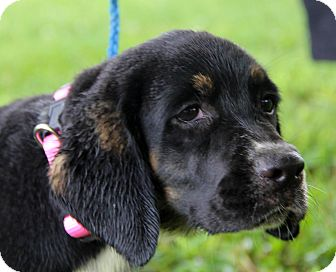 Golden Retriever Mix Puppy for adoption in Minnetonka, Minnesota - ADDIE