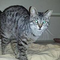 Adopt A Pet :: Wrangler - Iroquois, IL