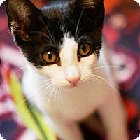 Adopt A Pet :: Pepe - N. Billerica, MA