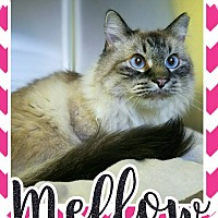 Adopt A Pet :: Mellow - Edwards AFB, CA