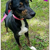 Adopt A Pet :: Aisa - Commerce, TX