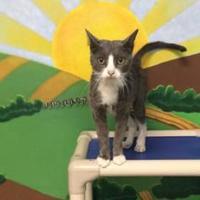 Adopt A Pet :: Kimmy - Beatrice, NE