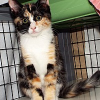 Adopt A Pet :: Allegra - Grants Pass, OR