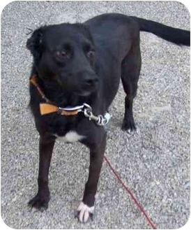 Terrier (Unknown Type, Medium) Mix Dog for adoption in Marion, Indiana - ZZ Top AKA Ozzy