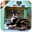Photo 3 - Calico Cat for adoption in McDonough, Georgia - Barbie