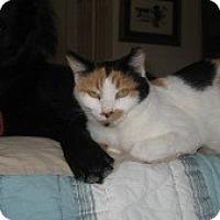 Adopt A Pet :: Kelly - Tempe, AZ