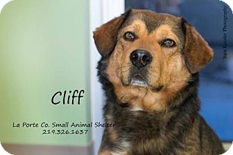 Rottweiler/Chow Chow Mix Dog for adoption in La Porte, Indiana - Cliff