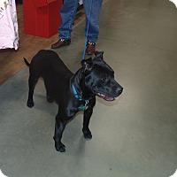 Adopt A Pet :: Lucy - Bedminster, NJ