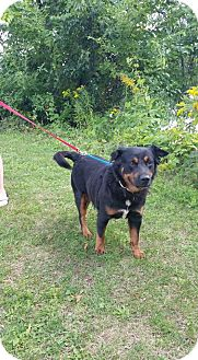 Rottweiler Mix Dog for adoption in Rexford, New York - Nino