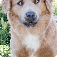 Adopt A Pet :: Bonnie - Patterson, CA