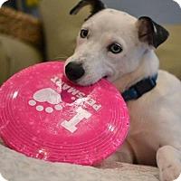Adopt A Pet :: Cassian - Poughkeepsie, NY